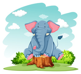 Elephant above the trunk