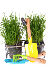 Grass in pots and  kids garden tools