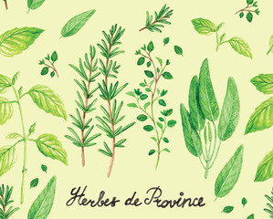 Watercolor Spicy Provence Herbs Pattern Vector illustration