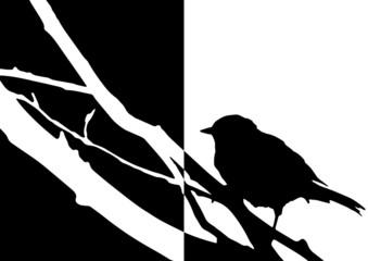 Silhouette d'un oiseau sur une branche moitié noire, moitié bl