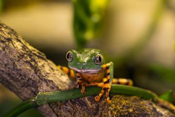 Frosch sitzt auf Baum