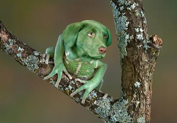 Foto auf Leinwand Frosch Frog Dog