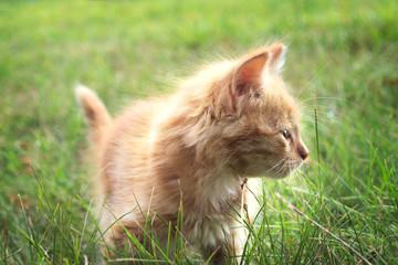 two kitten on green grass