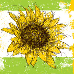 Sketchy Sunflower