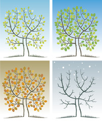 Tree in the four seasons. Spring, summer, autumn, winter