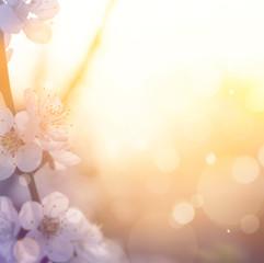 art Spring blossom background