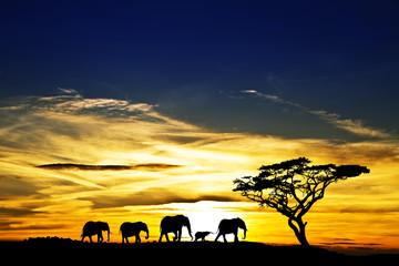 paisaje salvaje en el amanecer