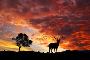fauna y naturaleza de colores