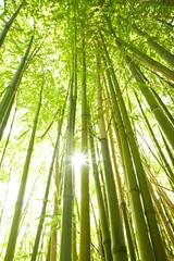hohe Bambusstämme