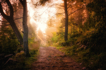 Path through the woods and light rays as they break through fog