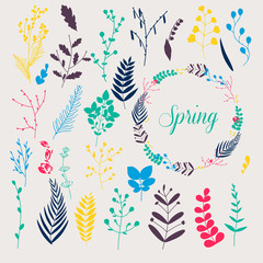 Collection of spring flowers, leaves, dandelion, grass. Design f