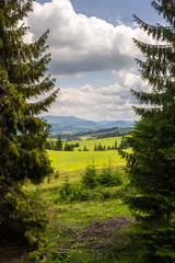 coniferous tree in a panoramic valley