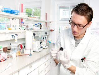 Young scientist in the lab holds mouse in gloved hands