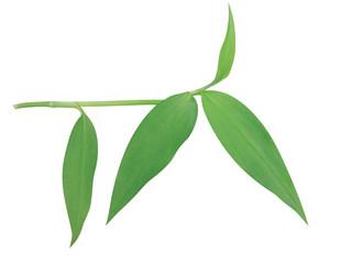 식물이미지