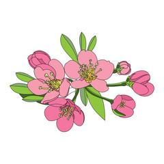 flowers fruit tree - apple, cherry or apr