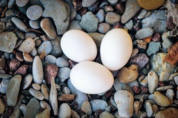 Three hen eggs