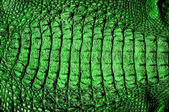 green crocodile alligator leather texture background