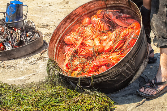 Pile of steamed lobsters on the beach in Maine. Summer tradition