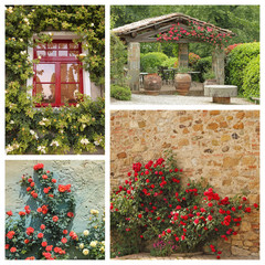 group of images with climbing roses in tuscan garden