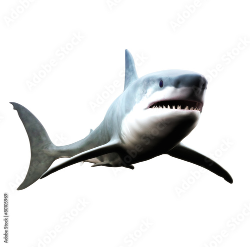 Great white shark swimming on a white background