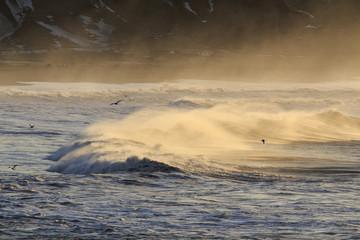 Il mare in Islanda: uccelli su onde