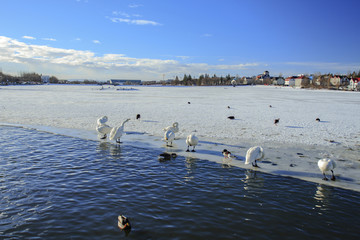 Reykjavík lago ghiacciato animali al sole