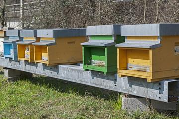 Bienenkästen im Tessin, Schweiz
