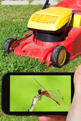tourist photographs of red dragonfly