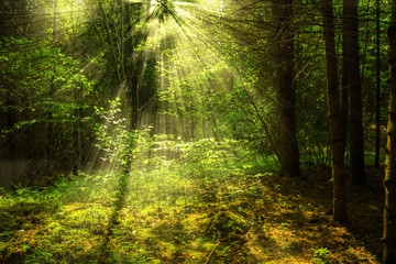 Forest with light