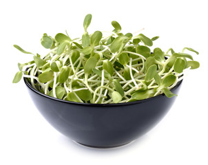 green young sunflower sprouts in black bowl