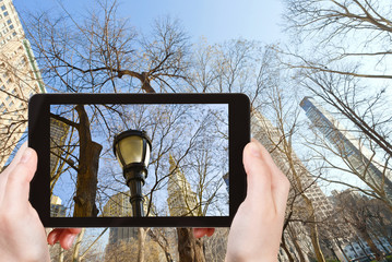 tourist photographs of bare trees in New York