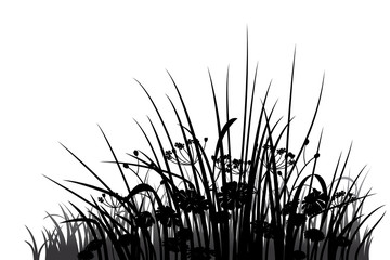 Wall Mural - Grass, herbs and flowers silhouette, vector illustration