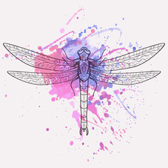 Vector illustration of dragonfly with watercolor splash