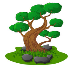 Beautiful bonsai tree isolated