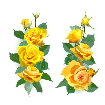 Set of yellow roses.