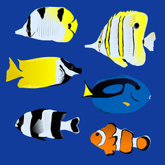 Great tropical fish collection on blue background, vector illust