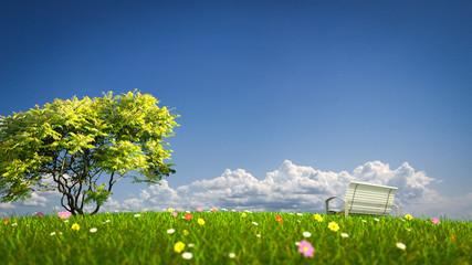 Bench on a grass field