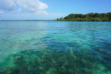 Clear water with corals below sea surface