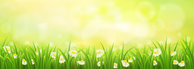 Spring sunny meadow with green grass and daisies