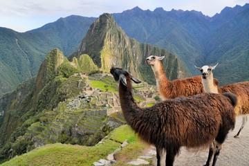 Llamas at Machu Picchu, lost Inca city in the Andes, Peru