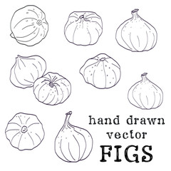 Set of hand drawn sketched figs, isolated on white