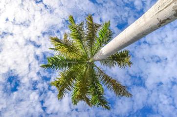 Palm at blue sky background