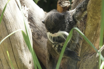 Buscar fotos animales salvajes - Animales salvajes apareandose ...