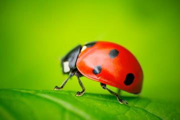 Ladybug and Leaf
