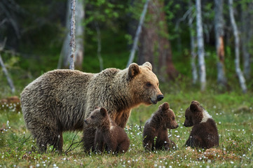 Mother bear and cubs