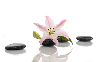 Spa concept with lily and black stone