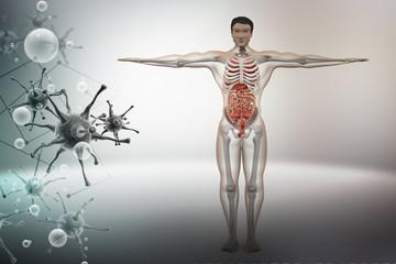 human anatomy with virus