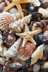 collection of starfish and seashells for background