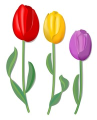 Vector tulip for spring design in red, yellow and pink