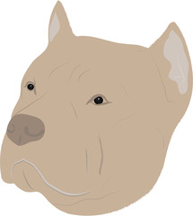 Illustration of  Pit Bull Dog